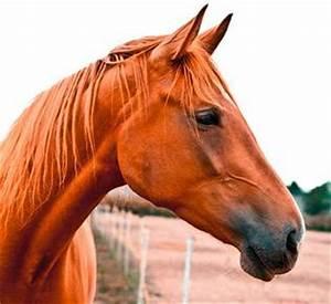 Bilder Von Pferden : die k rpersprache der pferde die schweizer plattform f r kostenlose tierinserate ~ Frokenaadalensverden.com Haus und Dekorationen