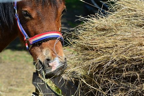horse hay horses feed cost nutrition eating germs much fight steamers bales against afford partnered tips per