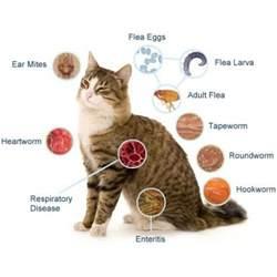 revolution flea cat revolution flea and heartworm protection for cats