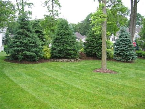 privacy landscaping ideas landscaping along fences warren nj softening privacy screening parker homescape