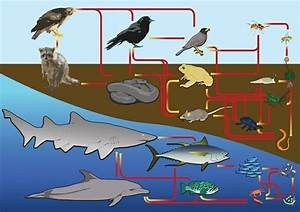 Marine Ecosystem