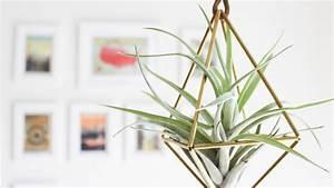 Suspension Pour Plante Interieur : quelles plantes mettre dans une suspension ~ Teatrodelosmanantiales.com Idées de Décoration