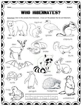 color in the animals who hibernate and cross out with pencil the animals that do not hibernate