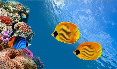 Summer Desktop Backgrounds Hd Ocean Underwater Wallpaper Hd Pixelstalk Net