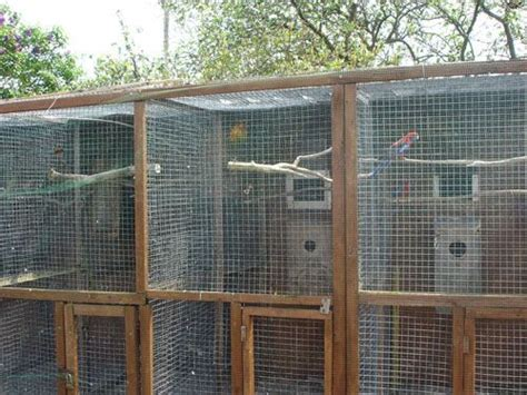 sugar glider cage 17 best images about aviary ideas on pictures