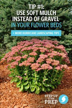 what can i use instead of mulch emergency preparedness tips on pinterest landscaping tips weather watch and your family