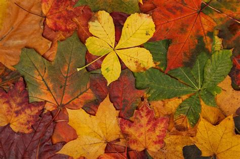 Orange Leaf Wallpaper by Abstract Fall Bright Brown Colorful Green Leaves