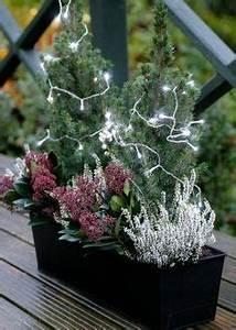 1000 images about Winter Garden Ideas on Pinterest
