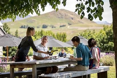 Wine Tourism Queenstown Zealand Industry Picking Ripe