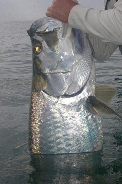 Tortuguero Costa Rica Sport Fishing