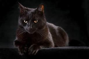 4 black cat the black cat s luck animal literature