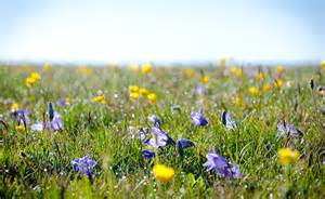 Risultato immagine per erbe alpine