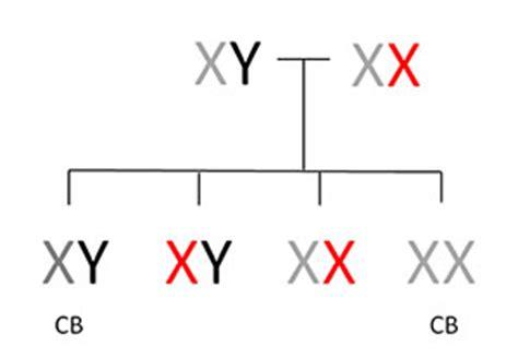 color blindness genetics understanding genetics