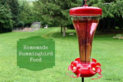 diy hummingbird food sustainable blessings homemade hummingbird nectar