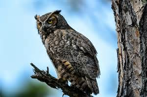 Great Horned Owl On Tree Branch Tattoo