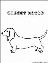 Coloring Bassethound Pages Printable Fun sketch template