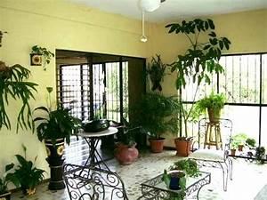 Piante da appartamento poca luce piante appartamento Piante da appartamento che richiedono