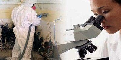 interpret lab results  mold sampling mold