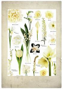Pin by EnGAYged Weddings on Wedding Flower Names | Pinterest