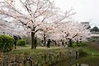 Fukuoka Highlight Tour to Hakata - Shore Excursions Asia