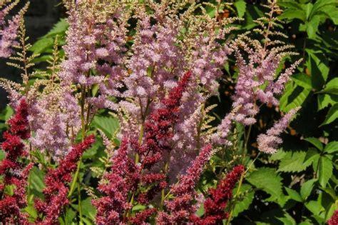 piante da vaso resistenti al freddo piante sempreverdi da giardino resistenti al freddo