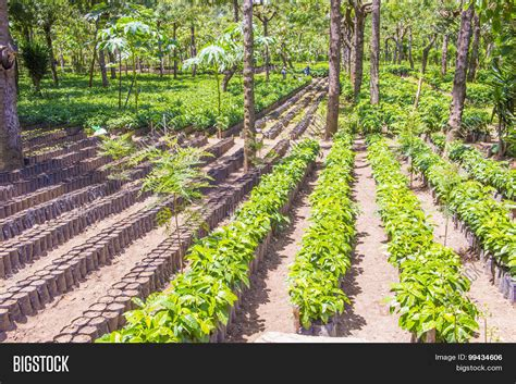 If it's a good premium bend then it has to come from a. Guatemala Coffee Image & Photo (Free Trial) | Bigstock