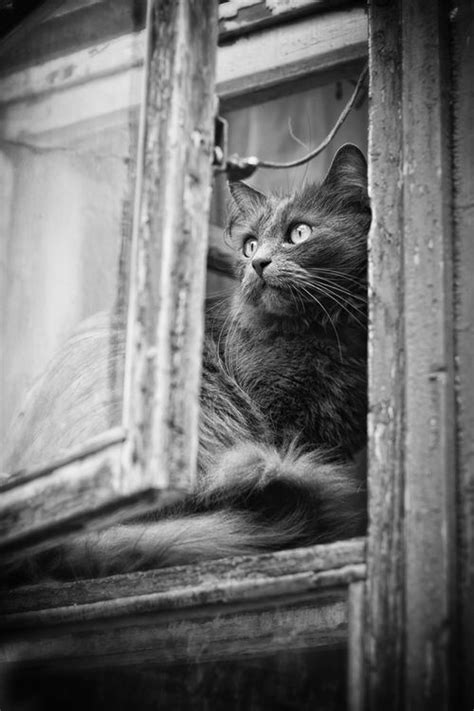 images  cats  windows  pinterest kitty