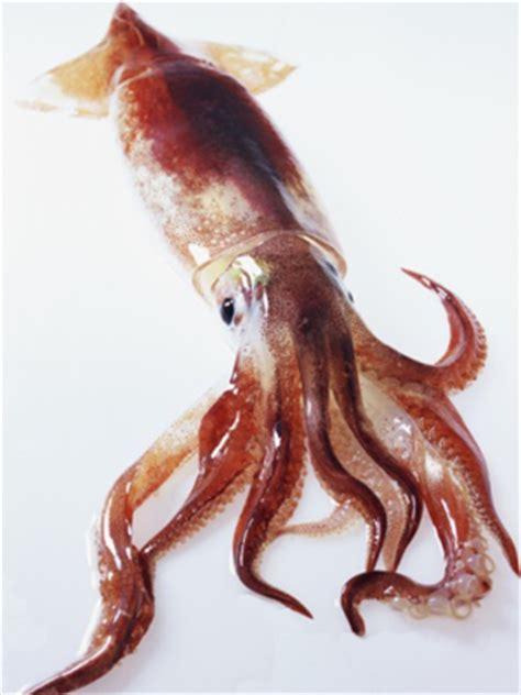 plat cuisiné calmar ou calamar boileau