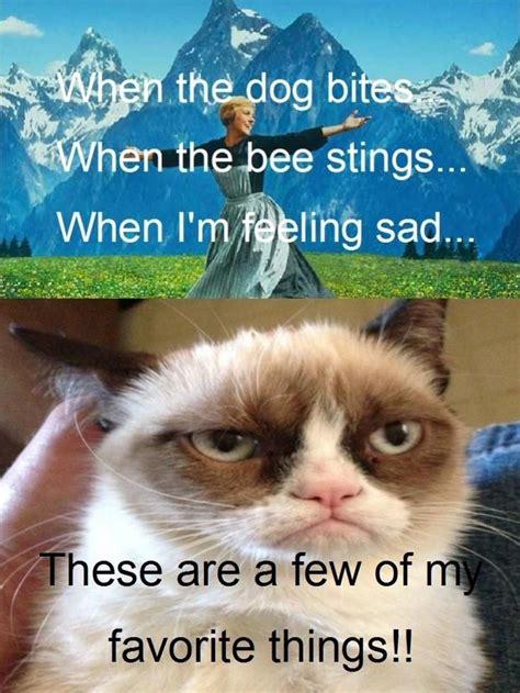 images  grumpy cat  pinterest