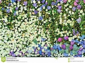 Mur De Fleurs : beau mur de fleurs image stock image du v nement pour 65082689 ~ Farleysfitness.com Idées de Décoration