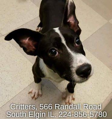 Pets  Randall Road South Elgin Illinois