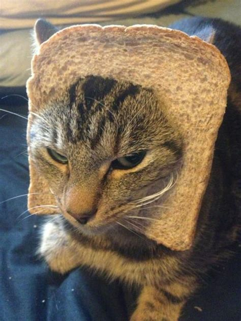 Robservations The Blog Of Robert Booth Cat Breading