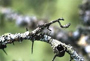 African Praying Mantis Camouflage