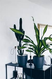 Blühende Zimmerpflanzen Pflegeleicht : 17 best ideas about zimmerpflanzen pflege on pinterest ~ Michelbontemps.com Haus und Dekorationen