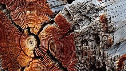 Texture Wood Dry