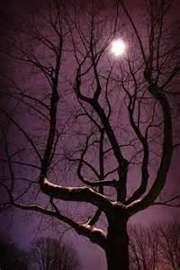 Purple Night Tree Moon