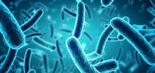 The perils of detecting pathogenic bacteria in foods - New ...