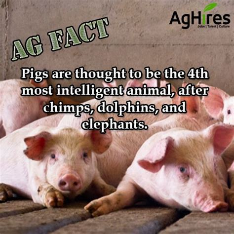 Pin on Agriculture Facts