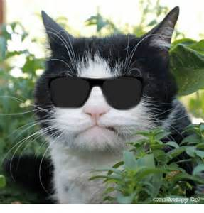 cat pics o2013 grumpy cat cats meme on sizzle