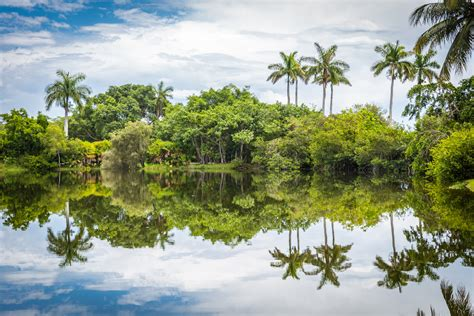 Gardens In Miami by The Kong National Tropical Botanical Garden In Miami