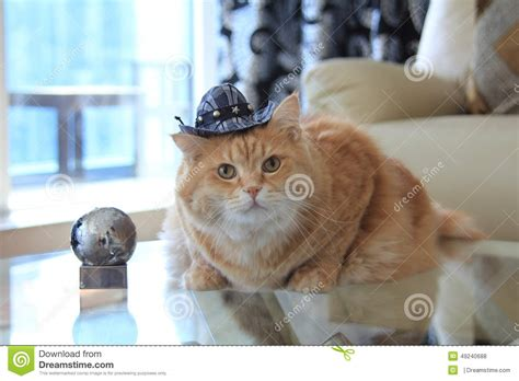 Cookie Cat With Cowboy Hat Stock Photo Image Of Looking