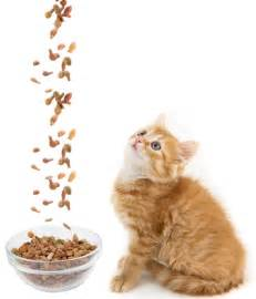 best cat food for kittens are you buying the best cat food