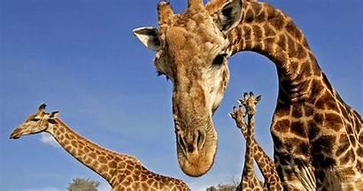 Animals Endangered Know Were Didn Didnt Rare