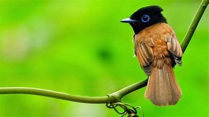 Birds Wallpapers Colorful Whatsapp Dp Status Nature