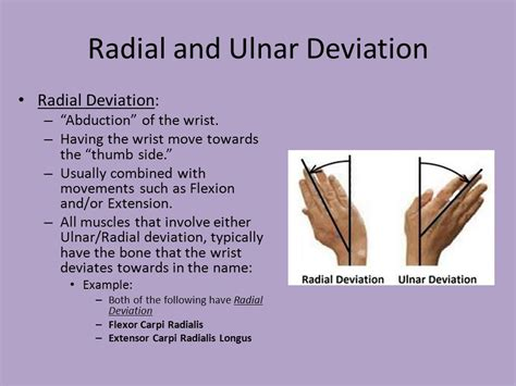 muscles of the wrist and forearm ppt