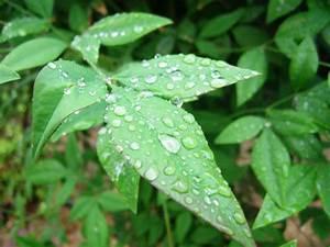 Raindrops On Plant Free Stock Photo