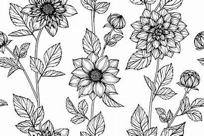 Dahlia Flower Drawing Pattern Line Drawn Seamless