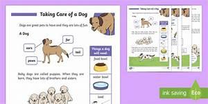 How To Take Care Of A Dog Ks1  Teacher Made
