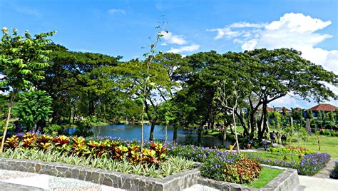 Bibit Collagen Surabaya 10 gambar kebun bibit wonorejo 1 2 surabaya taman flora