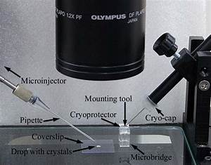 Protein Crystal Mounting